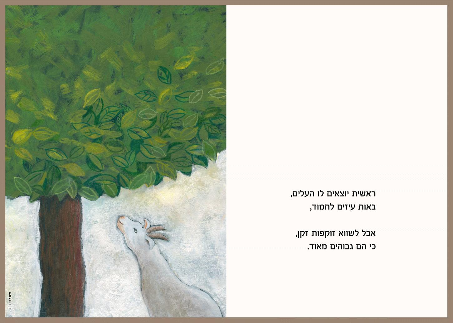 אגסים איור שיר(2)Pears poem